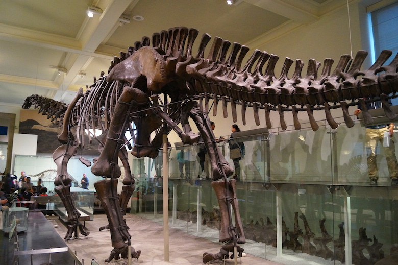 American Museum of Natural History New York City Top tourist attractions