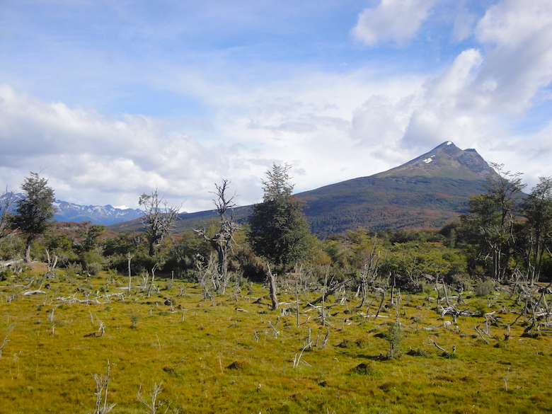 Tierra del Fuego National Park Amazing Things to Do in Ushuaia