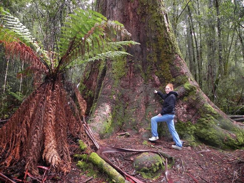 Mount Field Nationalpark Tasmanien Meine Highlights