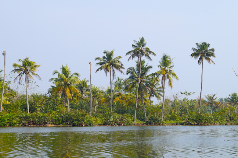 Kerala Backwaters Kochi Top Things To Do