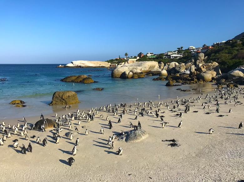 Boulders Beach Sehenswürdigkeiten Kapstadt