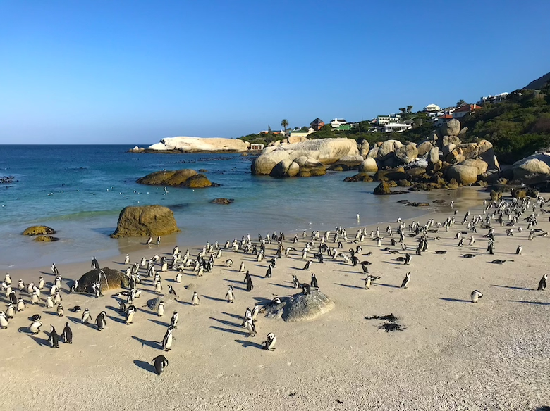 Boulders Beach Cape Town Top Things to Do
