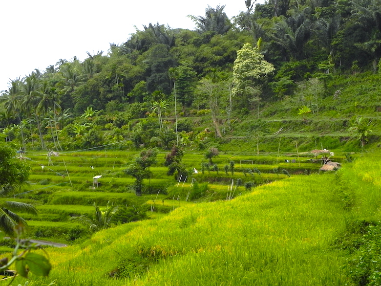Senaru Reisterrassen Lombok Highlights