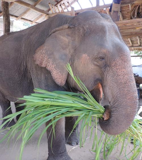 1 Monat in Thailand – Meine 10 Highlights