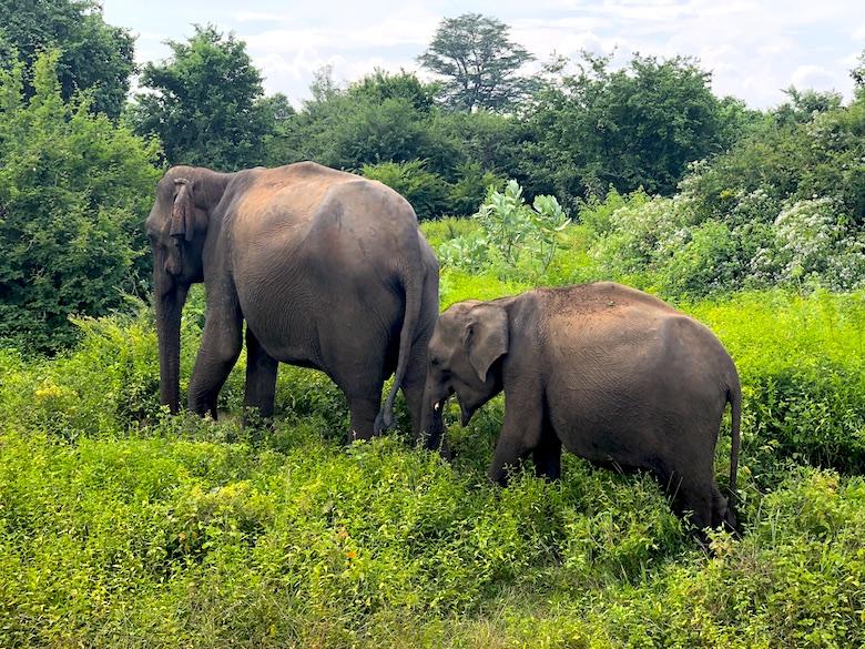 Uda Walawe National Park Ella Sri Lanka Road Trip Best Sights and Places