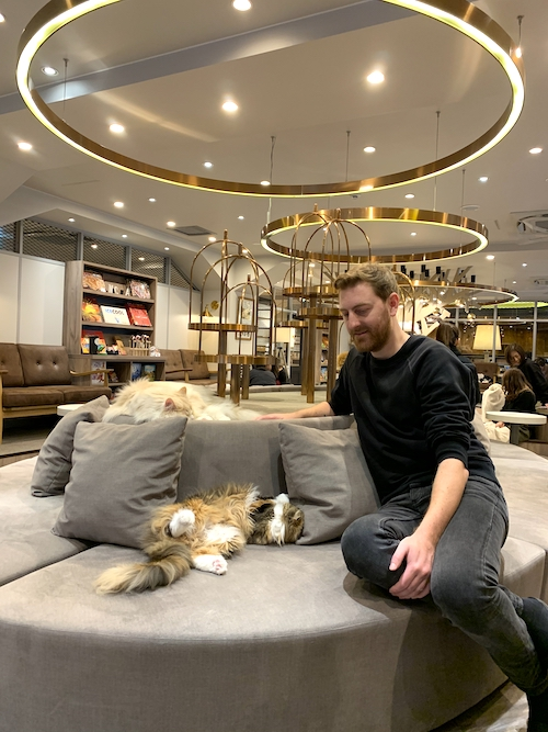 3 Tage Tokio Der Perfekte Stadtrundgang Cat Cafe Mocha